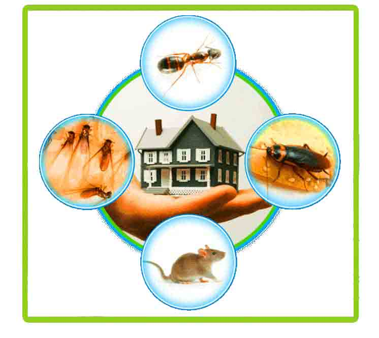 https://www.pestcontrol24x7.com/wp-content/uploads/2018/12/Pest-Control-Service-copy.jpg